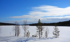 Peace be with you (sakarip) Tags: sakarip snow trees lake finland north winter spring sky cloud blue