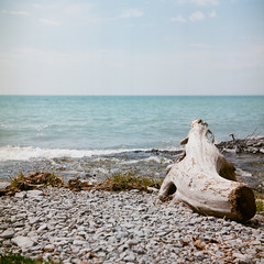 Beach (yotam.fogelman) Tags: analog film yashicad kodak portra160 120 mediumformat color nature canada water driftwood 6x6