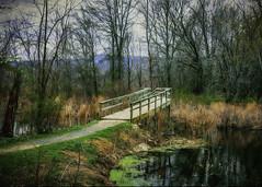 Wood footbridge (jsleighton) Tags: bridge foot wood landscape grass trees bird sanctuary