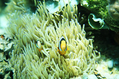 Cheese lol (Landersz) Tags: philippines filippine coron palawan club paradise snorkeling turtle shark clownfish nemo dugong landersz canon 5dmk3 nimar gopro hero5