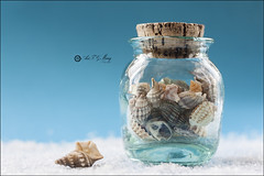 Proyecto 108/365 (Art.Mary) Tags: mar beach mer caracolas conches conchshells proyecto365 bodegón stilllife naturemorte canon azul bleu blue cristal verre crystal sal sel salt