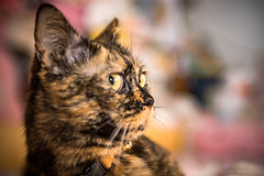 _DSC5588 (月詠小萌) Tags: 貓 猫 cat ねこ canon ef2870l