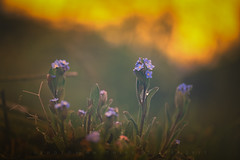 Burning Sky (matthiasstiefel) Tags: aub bavaria germany vergissmeinnicht flames forgetmenot horizont hyperbeast10 matte sky sun sunrise