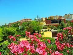 Coín (Málaga) (sebastiánaguilar) Tags: 2014 coín málaga andalucía españa flora