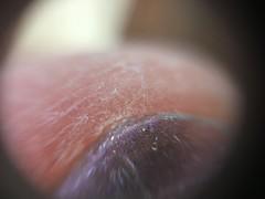 Dry skin and glitter polish (April 2017 workshop at Northside) Tags: diymicroscopes microscopic thankstokenjiyoshinos10microscopeinstructable