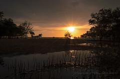 coastal sunset (Dingo photography) Tags: sunset ray sun sky goldenhours beach coastal trees nature naturephotography naturelover morib color puddle water outdoor nikon dx d5100 orange malaysia dingophotography landscape seascape shorelines
