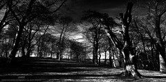 Lament (...She) Tags: lament woodland woods trees darknessandlight shadowsandlight blackandwhite bw scenery moody mood atmosphere nature monochrome mothernature silhouettes
