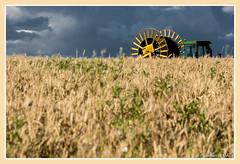 Champ de céréales / Cereals field -Chédigny (christian_lemale) Tags: chédigny touraine france nikon d7100 céréales cereals champ field tracteur tractor dispositif system irrigation