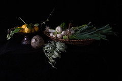 _MG_3086 (fdc!) Tags: naturemorte termessurlaphotographie fdc2013