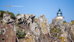 Far Cap de Creus (carlespuig) Tags: lighthouse nature landscape natura catalonia catalunya far costabrava paisatges empord capdecreus mediterrni