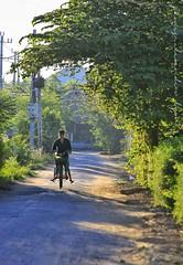 Being taken to school - Hoi An, Vietnam (lyon photography) Tags: road morning boy sunlight bicycle early mother vietnam hoian daybreak travelphotography headon lyonphotography jamesalexanderlyon