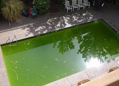 agua_verde_piscina