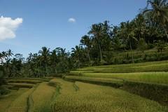 H_Gunung Kawi05
