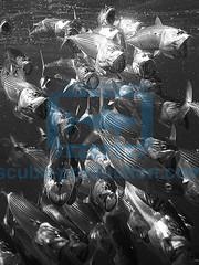 2013 06 ESK MER ROUGE 0001