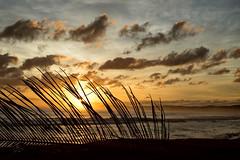 Luquillo Sunrise II (pantagrapher) Tags: ocean beach silhouette clouds sunrise nikon warm puertorico palm luquillo d600