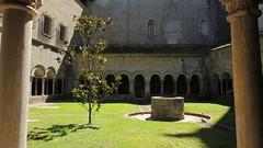 Girona - Spazio per la riflessione (Gian1979) Tags: barcelona tree cathedral girona catalunya cloister albero middleages gerona chiostro cattedrale moyenage flickrandroidapp:filter=none