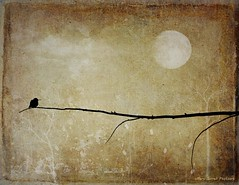 Out on a Limb (Passion4Nature) Tags: moon silhouette night shadows hummingbird moonlight ie memoriesbook magicartoftextures magicunicornverybest