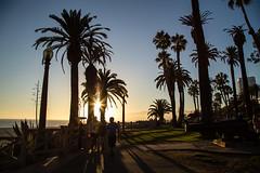Sunset (svon2) Tags: santa trees sunset beach canon los angeles palm monica 6d 24105mm