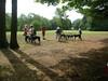 GreyhoundPlanetDay2008025