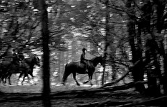 riders in the forest (daaynos) Tags: wood trees horses bw blur holland nature netherlands forest bos riders paarden bewogen ruiters