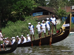 St.Francis Boat Club in Sree Karthikeyan Snake Boat (Rajesh Kalapura) Tags: india boat town no kerala noel southindia kottayam kumarakom boatrace snakeboatrace vallamkali chundanvallam karapuzha veppu thazhathangadi champakkulam chundanvallom karichal jesusboatclub kumarakomtownboatclub iruttukuthi rajeshkalapura vellamkulangara sreekarthikeyan jawaharthayankari dayino1 thuruthithara 3thaikkan ajiben anilkalapura stfrancisboatclub villageboatclub clubvellamkulangarakarichalsree karthikeyanjawahar thayankarichampakkulamdayi 1thuruthithara3thaikkanaji bennoelanil kalapuravallam kalichundan vallamsouth