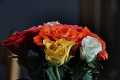 Colorful Roses (Infomastern) Tags: flower colors rose bouquet ros bukett