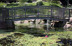 Lily pond (Ben936) Tags: wood bridge flowers green leaves garden waterfall pond lily structure handrail float cataract lilypond