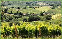 Vernaccia Di San Gimignano, Tuscany, Explore Nov 13, 2013 #400 (claude lina) Tags: italy explore tuscany sangimignano toscane monteriggioni italie