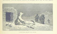 Image taken from page 291 of '[The Sea: its stirring story of adventure, peril & heroism.]' (The British Library) Tags: large polarbear publicdomain vol02 page291 bldigital mechanicalcurator pubplacelondon date1887 whymperfrederick sysnum003914899 imagesfrombook003914899 imagesfromvolume00391489902