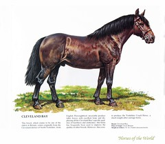 """""""Horses of the World"""" (dog.happy.art) Tags: horses horse art illustration book thriftstore equine horsesoftheworld pierocozzaglio {vision}:{outdoor}=0972 {vision}:{text}=0548"""