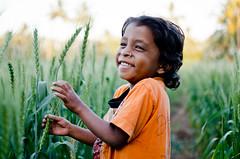 Gujarati Farm Girl (B.Bubble) Tags: travel india cute girl smile kid child farm wheat laugh gujarat