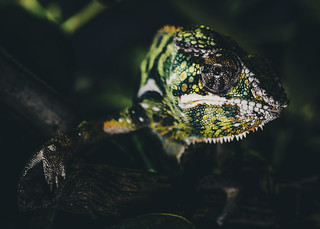 Chroma Chameleon