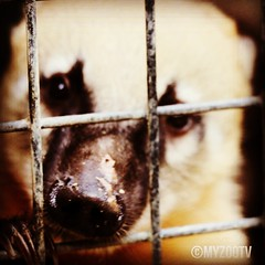 neugieriger Nasenbär - curious coati