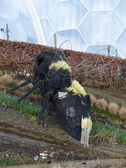 Giant Bee (1) - 13 February 2017 (John Oram) Tags: giantbee edenproject cornwall 2002p1150044