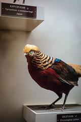 Trump the Bird!? (liliweissensteiner) Tags: nhm museumofnaturalhistory naturhistorischesmuseum naturhistorisch museum taxidermy animal bird donaldtrump trump thingsthatlooklikedonaldtrump wig yellowhair