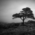 A Tree thumbnail