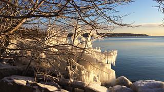 Draped In Ice IMG_4318
