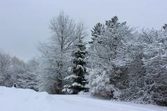 Snow Covered Trees (pegase1972) Tags: quebec tree winter québec canada qc arbre hiver snow neige monteregie montérégie licensed shutter 500px fotolia rf123