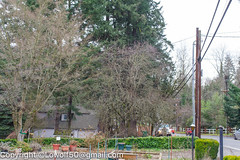 Accident Unsung Heros 30_MG_1774.jpg (orig_lowolf) Tags: accident canoneos5dmarkii carwreck centurylink flickr lakeoswego march2017 oregon pge phone sigma247028ex unsungheros