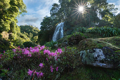 Azores Blooms (romiana70) Tags: portugal travel europe sao miguel waterfall green sun star azaleas blooms spring park tourism