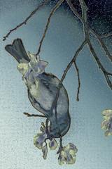 Equilibrista (seguicollar) Tags: pájaro rama ramas flower flor flores comiendo alimento primavera