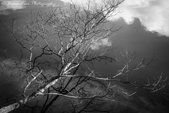 Mind Games (.Brian Kerr Photography.) Tags: lakedistrict landscape landscapephotography lakes cumbria clouds thirlmere water reflections tree sky photography nature naturallandscape outdoor outdoorphotography briankerrphotography briankerrphoto mono blackandwhite monochrome