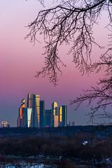 DSC_8314_1 (sergeysemendyaev) Tags: 2016 moscow russia pink sunset beautiful branch city moscowcity skyscrapers beauty amazing dusk москва россия розовый закат красота ветвь сити москвасити небоскребы удивительно