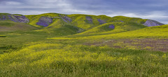 Botanical Quilt (pixelmama) Tags: april2017 blm bureauoflandmanagement california carrizoplain carrizoplainnationalmonument pixelmama sanluisobispocounty santamargarita spring superbloom wildflowers trackthebloom
