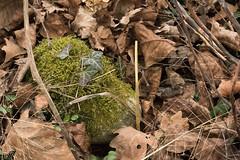 Caillou... (Tiolu.) Tags: caillou mousse nature feuilles cachecache