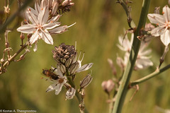 Nature awakening (ktheog) Tags: nature salamina spring