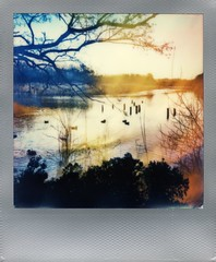 (er_code_blue) Tags: polaroid 690 600 impossibleproject instant analog integral film polaroidweek 2017