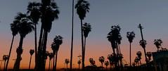 Venice Beach Sunset ☀️ | GTAV (Razed-) Tags: venice beach sunset santa monica gtav grand theft auto v vespucci