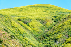 Spring - Steep (www.karltonhuberphotography.com) Tags: 2017 bluesky drainage hilltop horizontalimage invigorating karltonhuber landscape nature outdoors peaceful relaxing rollinghills southcounty southerncalifornia spring steep summit theoc wildmustard wildflowers yellow