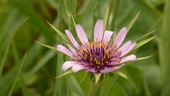 Schöne Unbekannte 2 (Christewen) Tags: wildblume andalusien frühling